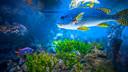 【亲子营】【亲子时光】海底大轰趴2日游【海底世界晚餐/住宿海底世界/亲子互动】