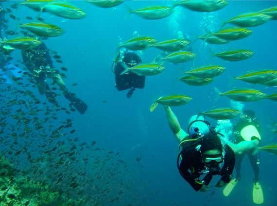 壁纸 海底 海底世界 海洋馆 水族馆 桌面 570_425