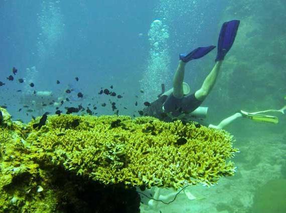 壁纸 海底 海底世界 海洋馆 水草 水生植物 水族馆 570_425