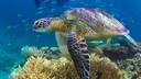 凯恩斯翡翠岛大堡礁一日游