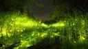 仙本那红树林半日游(长鼻猴+萤火虫)