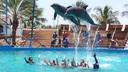 【亲子首选】夏威夷欧胡岛海洋公园与海豚游泳