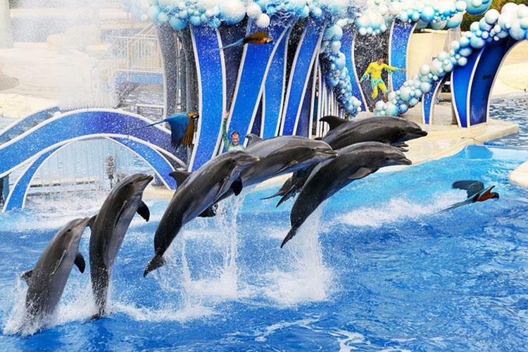 奥兰多海洋世界位于佛罗里达州的奥兰多,既是一个主题公园,也是一个以海洋生物为基础的动物园,于1973年对外开放,占地面积200英亩,以自己特有的戏剧性和探险性为奥兰多增添了海洋元素。奥兰多海洋世界是美国参观人数居第九位的主题公园,以各类海洋动物如海豚、海象、海狮的表演闻名于世,其中重达2吨的杀人鲸的特技表演更是使人拍案叫绝,是最值得观看的项目之一,很多来此的游客就是为了观赏杀人鲸精彩绝伦的表演。除了杀人鲸、海豚、水獭、海豹、海牛、企鹅、鲨鱼和其它深海居民所作的表演和展出外,海洋世界还以令人心跳的游乐设施和