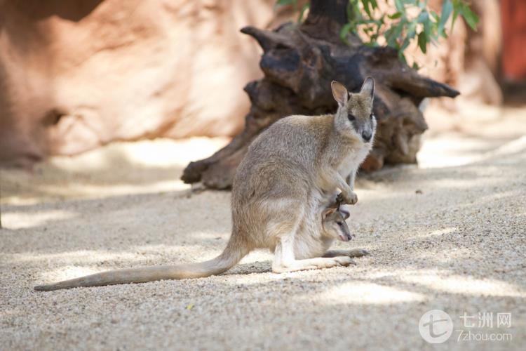 悉尼野生动物园门票(最大室内动物园)