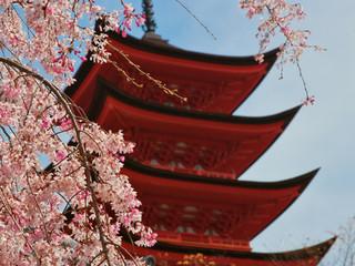 樱花季:遨游网赏樱产品同比增长五成
