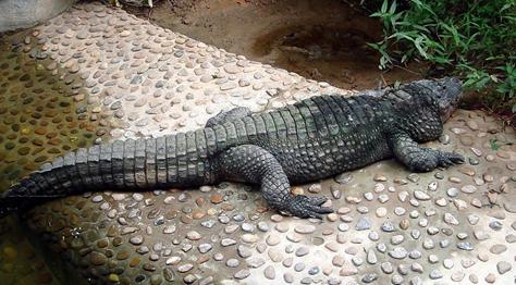 广州动物园门票价格广州动物园开放时间