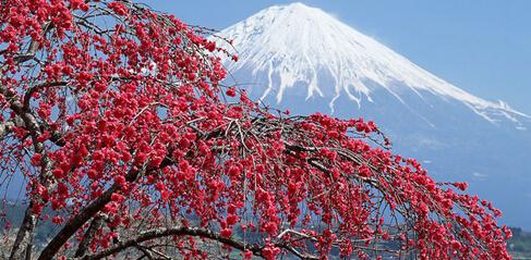 12月份去日本哪里好玩_中青旅遨游网