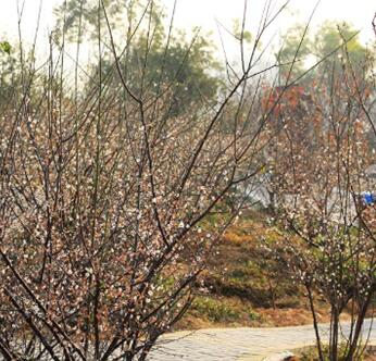惠州市区及周边赏花地推荐
