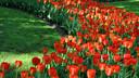 【赏花】荷兰+德国10日清新田园10日游【赏郁金香/森林骑行/羊角村】