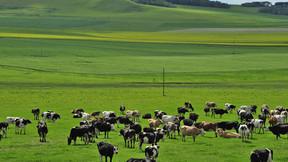 【蔚蓝】大连、海拉尔、阿尔山、满洲里、呼伦贝尔大草原双飞双卧7日游