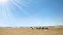 阿尔及利亚11日游【撒哈拉沙漠/世界文化遗产巡礼/特色部落表演】
