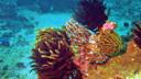 【浮潜圣地】马尔代夫4晚6天百变自由行【阿玛瑞/2沙2水/香港往返】