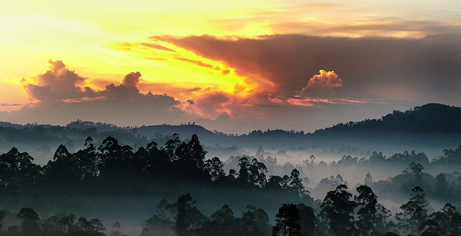 斯里兰卡 茶山深呼吸