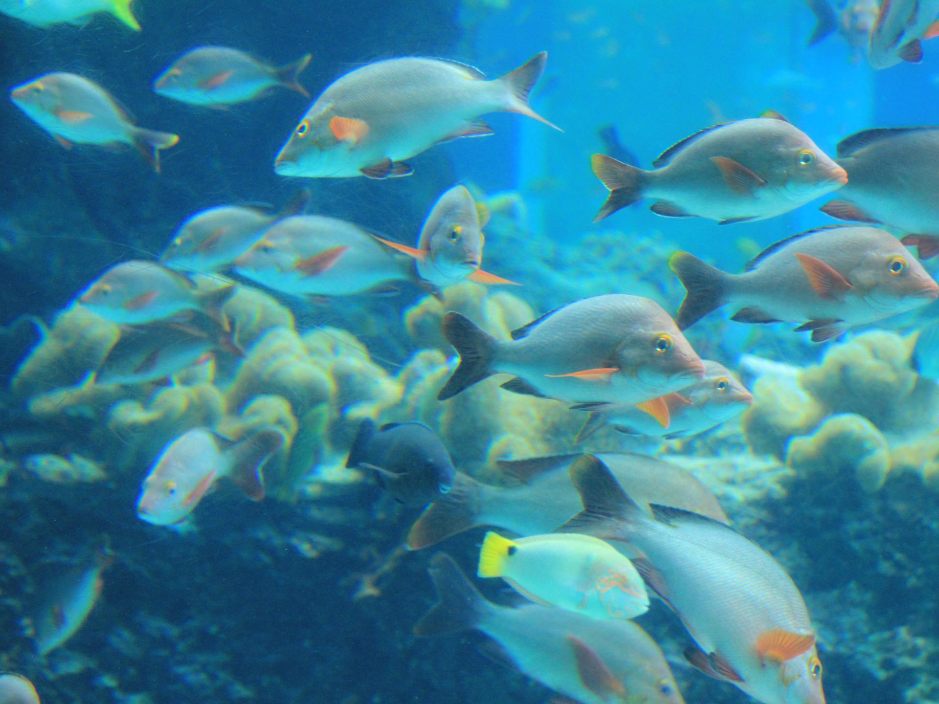 冲绳神秘青洞潜水体验【中文教练沟通无障碍】【自营】