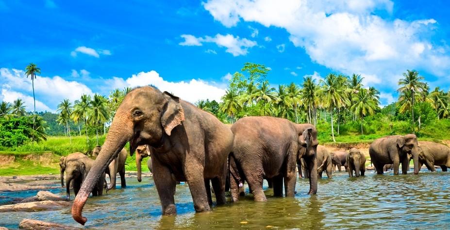 斯里兰卡 动物趣追踪