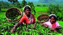 斯里兰卡 茶山深呼吸6晚7天私享游