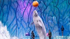 """【乐园】芜湖大白鲸海洋公园、芜湖十景之首""""赭塔晴岚""""赭山公园1日游"""