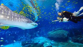 【亲子营】【童趣横琴】珠海长隆 星奇塔 狮门娱乐天地 国家地理探险中心4日游