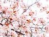【经典之旅】本州大阪+东京+富士山双古都6日游【南京直飞/升级一晚温泉旅馆/全程无自费】】