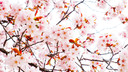 乐享东京都 东京+箱根+富士山+镰仓5+1半自助游【东京一天自由活动】