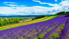 【花见日本】日本北海道5晚6天半自助【札幌市区连住/超低价 初遇北海道】