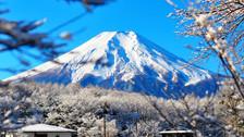 【和风尊致】日本本州大阪+京都+伊豆+东京6日5晚跟团游
