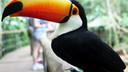 美洲-南美巴西阿根廷智利秘鲁4国19日游【4星/亚马逊雨林/大冰川】