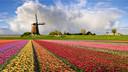 【荷你有约】 荷兰德国捷克14日-赏花之旅