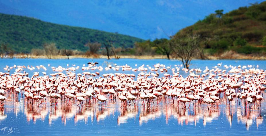 肯尼亚&坦桑尼亚 动物大迁徙
