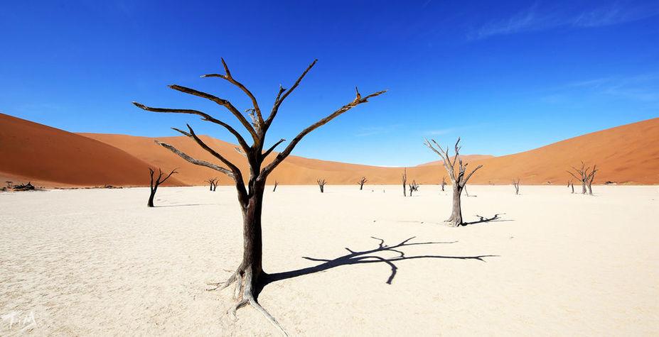 纳米比亚&南非 星空下的上帝餐桌