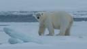 北极盛宴-漫游三岛探秘北极之旅18日(三人舱)