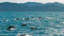 澳大利亚凯恩斯墨尔本 考拉奔体验亲子10日游【上海往返/4-5星+菲利普岛/史蒂芬港观鲸】