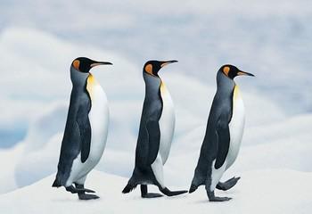 南极&阿根廷 银海征程