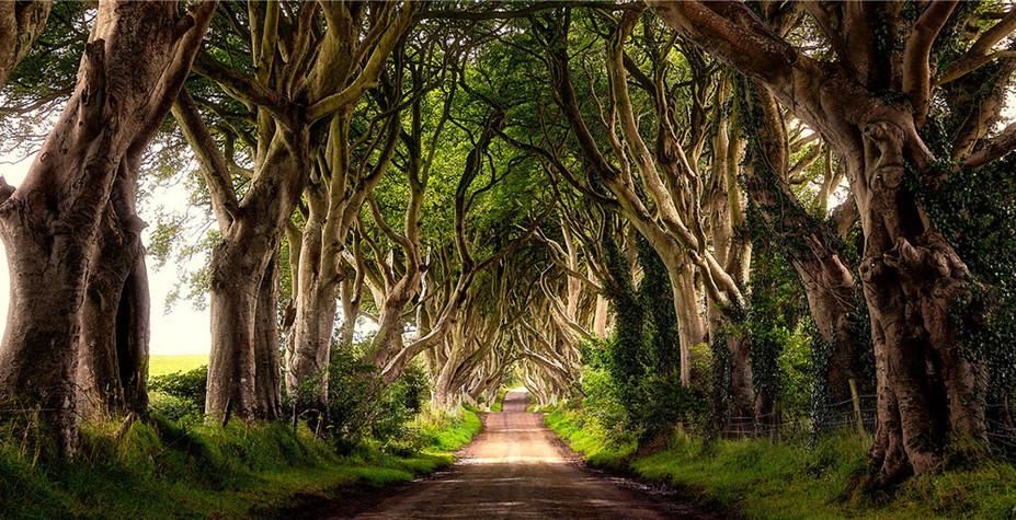爱尔兰 绿岛挥杆