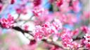 【特价机票】日本冲绳单机票4晚5天百变自由行【国航直飞/超值特惠】