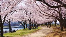 【初遇关西】日本大阪一地连住4晚5天百变自由行【超低起价/门票·车票·当地游随心订】