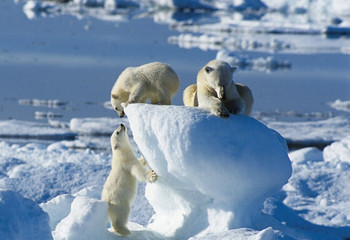 北极&北欧 北极熊王国