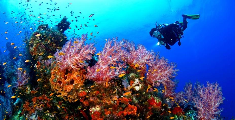 印尼 海底两万里