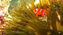 【任我行–奢享版】马来西亚仙本那5晚7日半自助游【多款网红度假村任选/潜水爱好者+摄影爱好者的天堂/人间伊甸园】