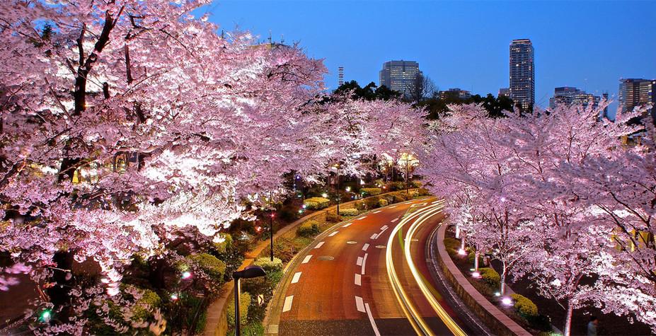 东京&热海 月夜樱吹雪