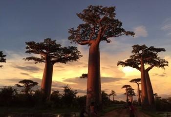 留尼汪&马达加斯加 狂野印度洋