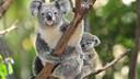 【热卖】澳大利亚+新西兰+凯恩斯全景12日游【直升机体验+天堂农庄+考拉合影】