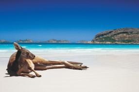 【立减3000】澳大利亚海洋之心汉密尔顿岛浪漫10日游【国航直飞 心形大堡礁游船 三晚珊瑚景酒店 考拉公园餐厅】