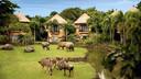 【巴厘岛】「奇妙动物夜」野生动物园酒店1晚亲子套餐