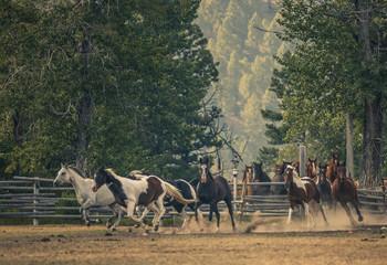 美国 美式牧场主