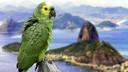 巴西跟团游