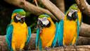 【世界文化遗产】美洲-南美秘鲁亚马逊河轮发现之旅12日游