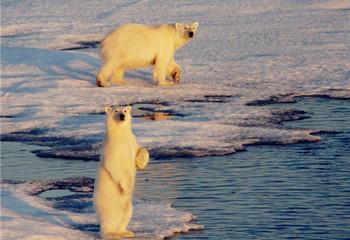 北极三岛 斯瓦尔巴群岛&格陵兰岛&冰岛