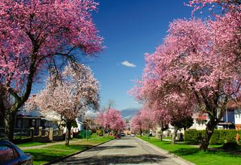加拿大 温哥华和罗兰夏朵的早春