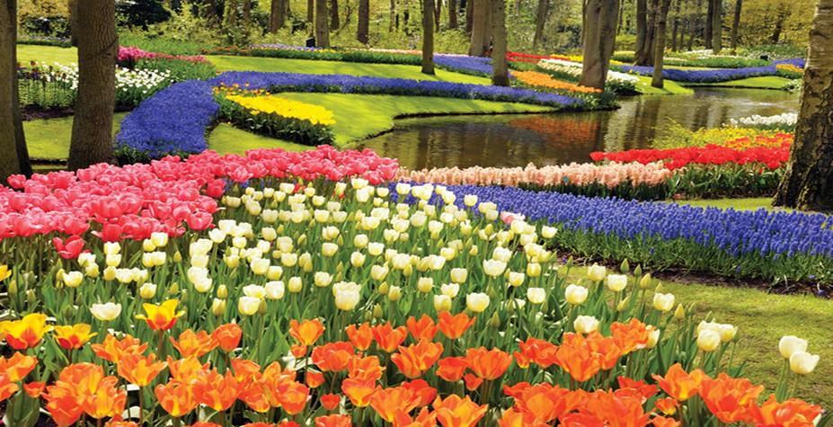 荷兰比利时的明媚春光 APT奢华河轮之旅